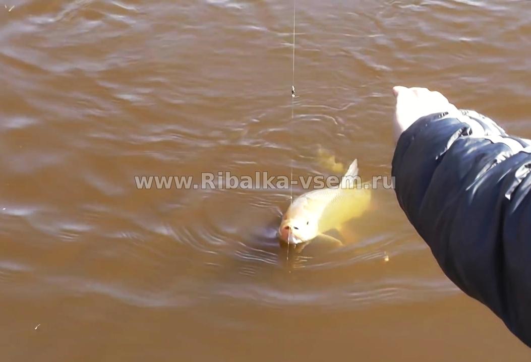 Ловля язя - Русская рыбалка