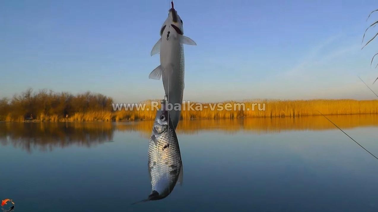 рыбалка ятерями