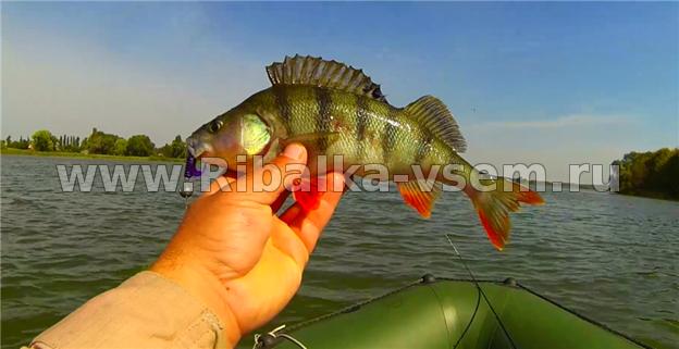 окуневая рыбалка