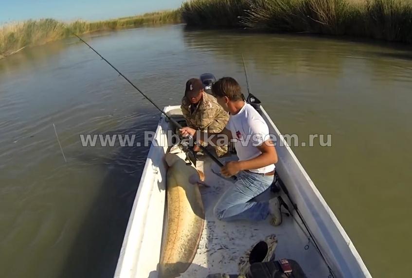 секреты рыбалки на ахтубе
